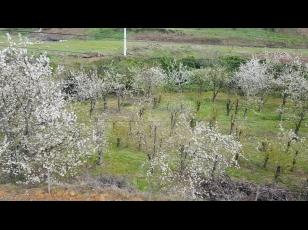Quinta no Douro - 3ha com vinha e cerejeiras