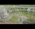 DE-0193, Quinta no Douro - 3ha com vinha e cerejeiras