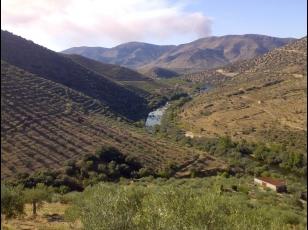 Quinta no Douro com 60ha